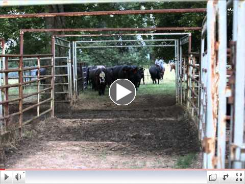 Bozeman Farms_Weaning.wmv