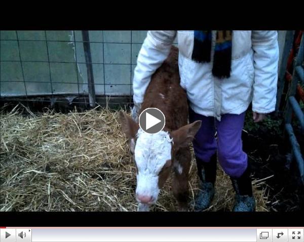 Nina & her baby calf