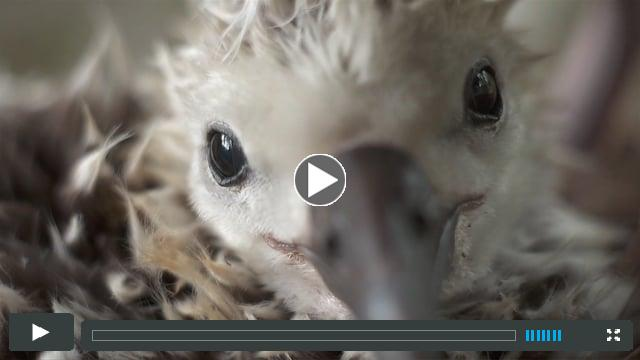 Chris Jordan's ALBATROSS film trailer