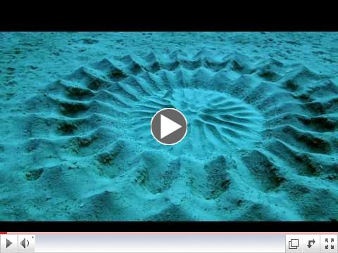 Puffer Fish Nest Creation