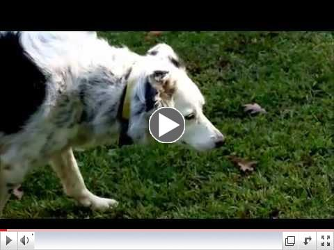 Nova Science Now : How Smart Are Dogs?