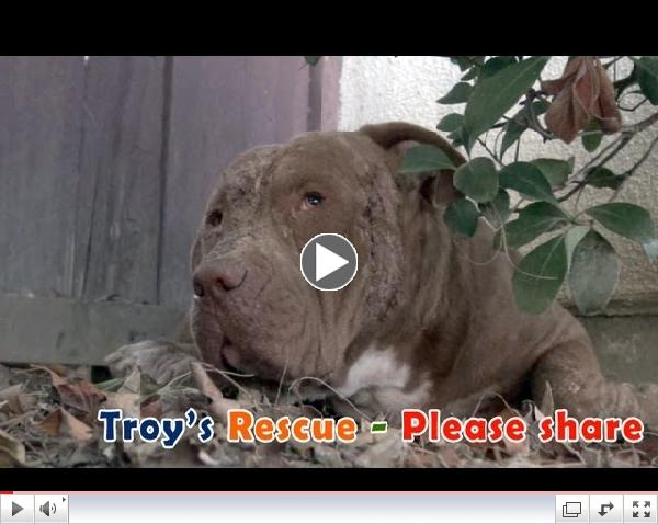 HOPE FOR PAWS - THE AMAZING RESCUE OF TROY!