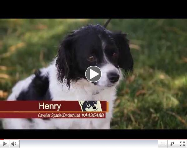Pets of the Week #7 Henry & Cole
