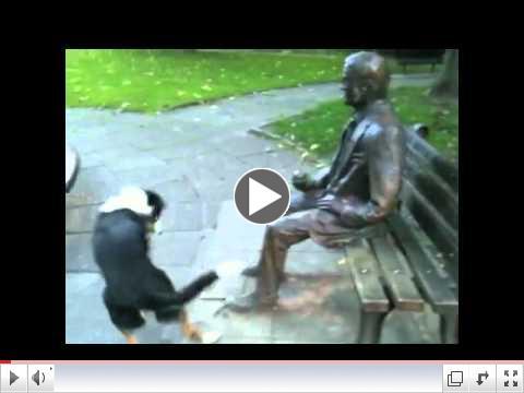 Very funny dog! Really determined too...[ORIGINAL]