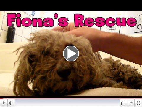 Blind dog rescue: Fiona - please share on Facebook, Twitter, MySpace and Blogs.  Thanks!