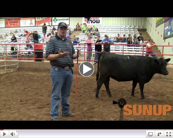 Cattle Judging (7/19/14)