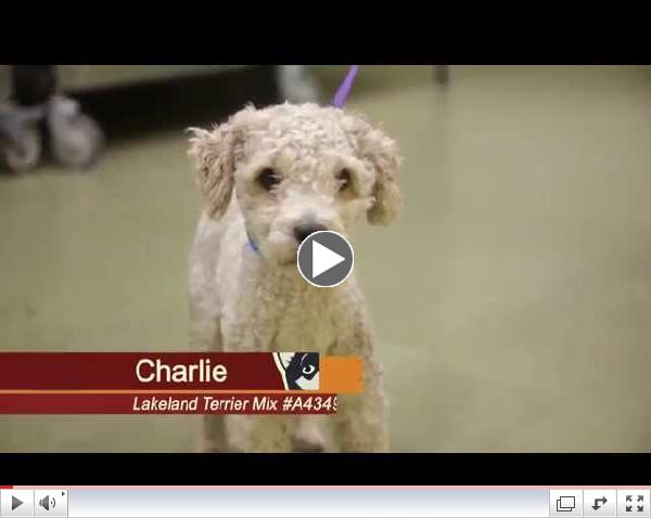 Click to watch Pets of the Week Episode #5 Charlie & Echo