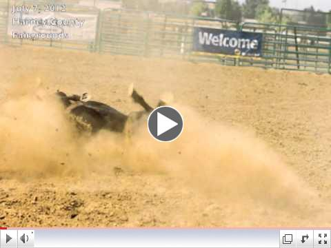 Oregon rodeo exposed, horses roped, tripped, and slammed to the ground