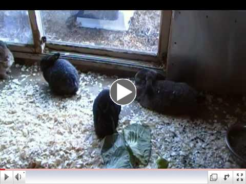 Rescued Bunnies Nomming