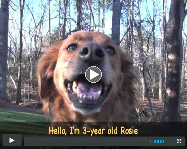 Feb Orphan of the Month - Meet Rosie