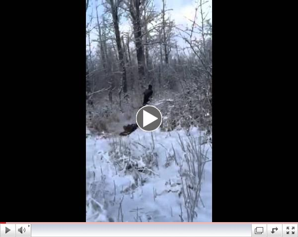 Alaska Retriever Training