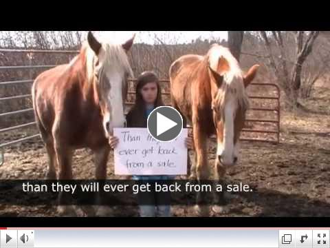 If you love horses, you must watch this video