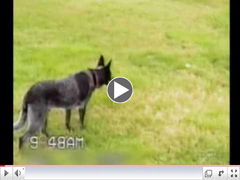 This is one Smart dog, maybe even the smartest dog in the world