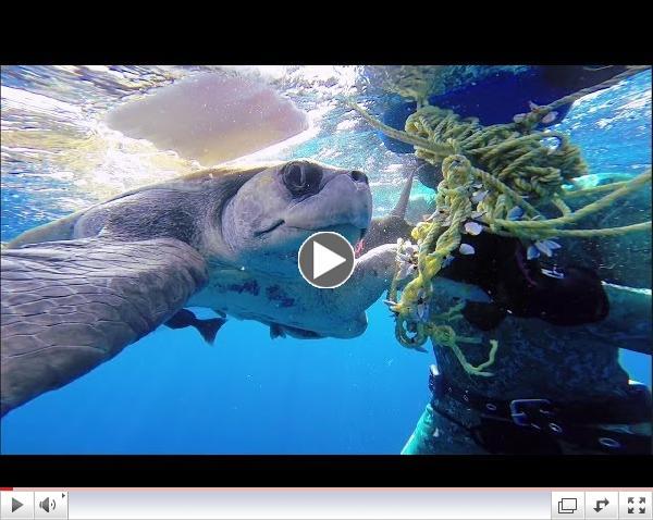 GoPro: Diver Saves Sea Turtle