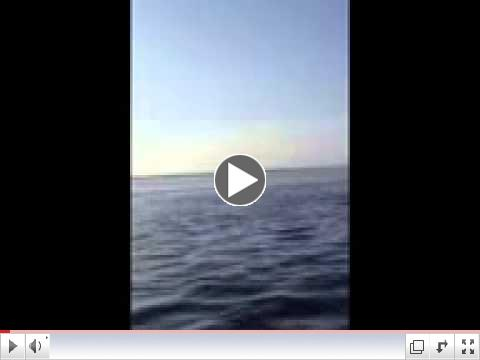 Deadman Bay Tarpon video