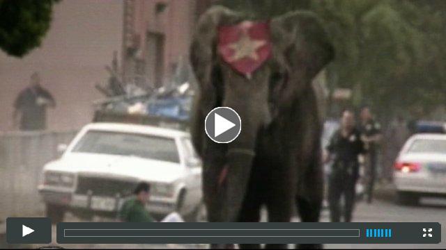 Tyke Elephant Outlaw Trailer