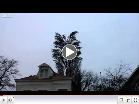 LiveLeak - Group of Birds Fly Simultaneously Away
