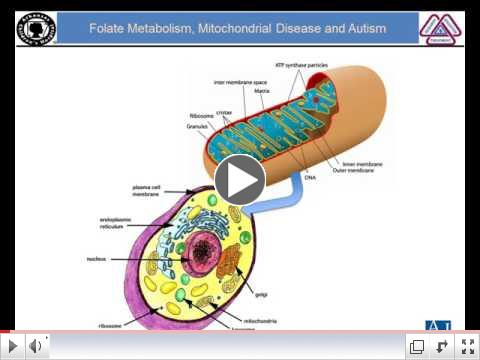 Folate Metabolism, Mitochondrial Disease and ASD