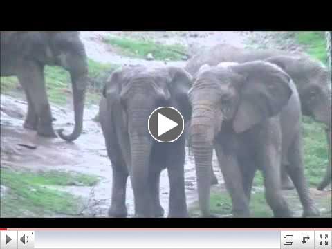 African Elephants: February Rain
