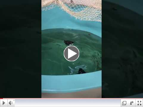 Dovekies - Swim Time at Wild Care!