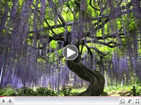 Beautiful Japan: Ashikaga Flower Park