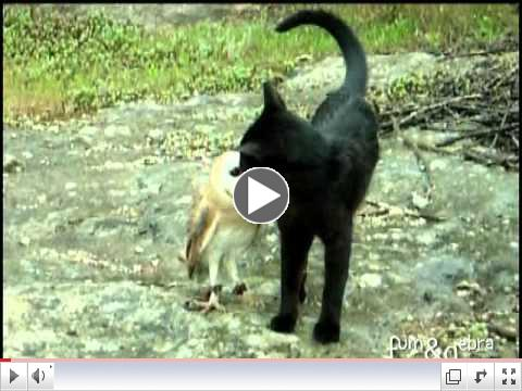 Cat and owl playing - Fum & Gebra - Perfect friendship!