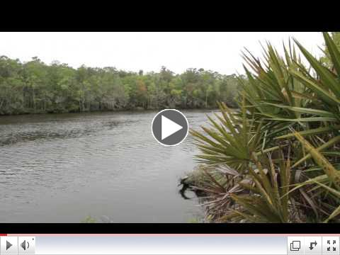 SFI Florida Forest Partners Audit