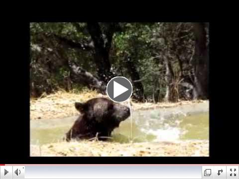 Ben the Bear: Splish Splash!