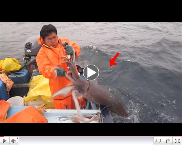 Fishing for Giant Squid