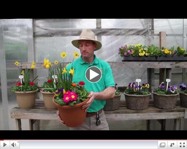 Watch our series of videos for Early Spring Plants
