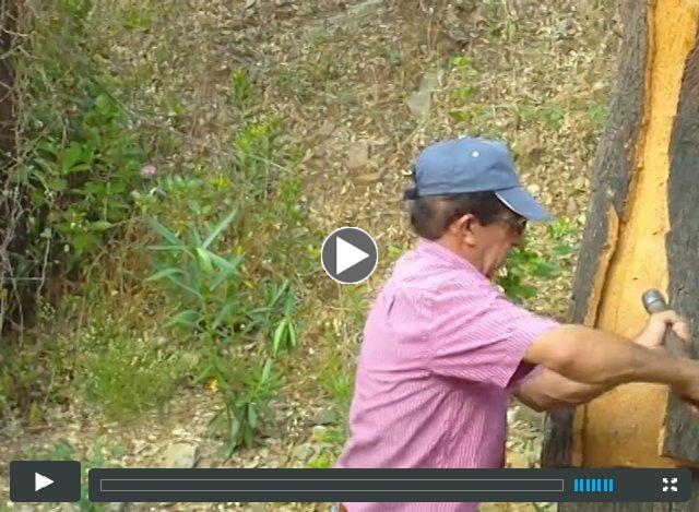 Cork Tree Video