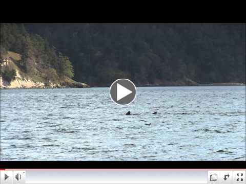T049As at Swifts Bay, Lopez Island - 4.12.15