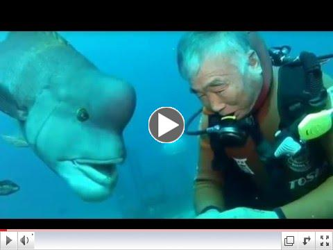Diver & His Fish Friend