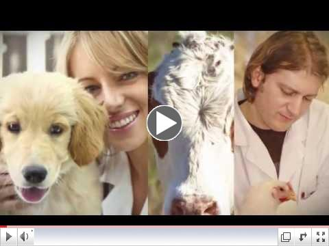Welcome of the World of Veterinary Medicine