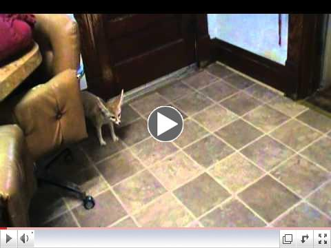 Cute Fennec Foxes Wiley & Quiggly