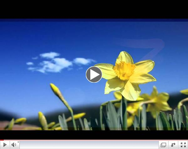 The Brothers Four - Seven Daffodils