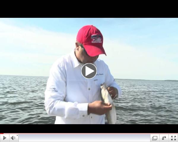 Tony Roach Fishing Report 6/25/13