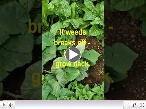 Green Thumb at 60 - Video #7 - Garden Maintenance 1 view