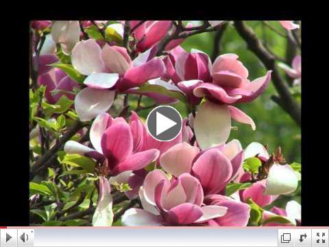 Spring Song (Mendelssohn)