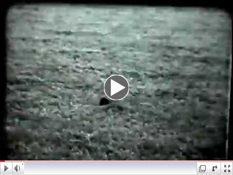 Television Highlights of 1963 National Retriever Field Trial Championship