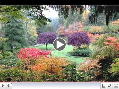 Beautiful Garden Video