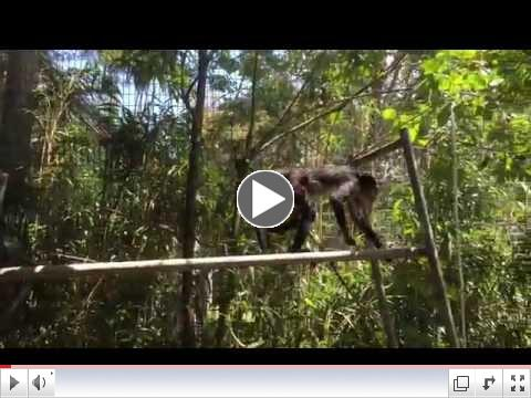 Watch Molly Swing on the rope!