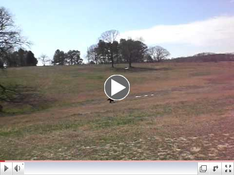 Sampson passes a Coursing Ability Test (CAT)