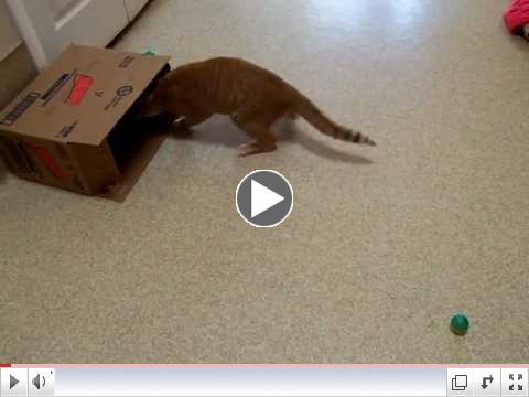 Peachie having fun with a box