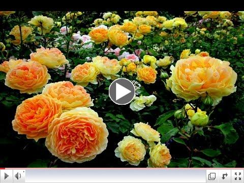 Botanical Gardens | Flowers, Orchid, Roses