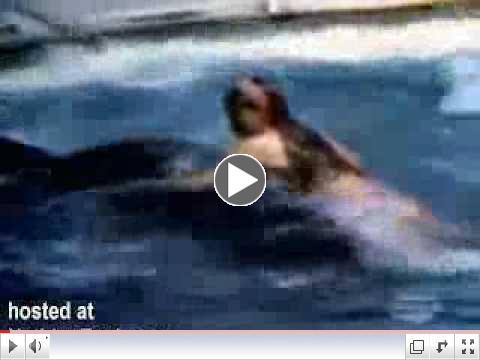 Killer Whale Attacks Unsuspecting Girl