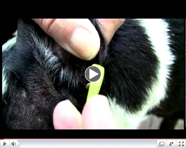Dr. Mercola: Tick Stick Removal Tool