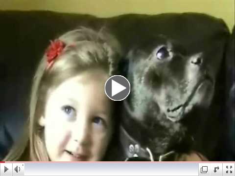Best Staffordshire Bull Terrier video ever!