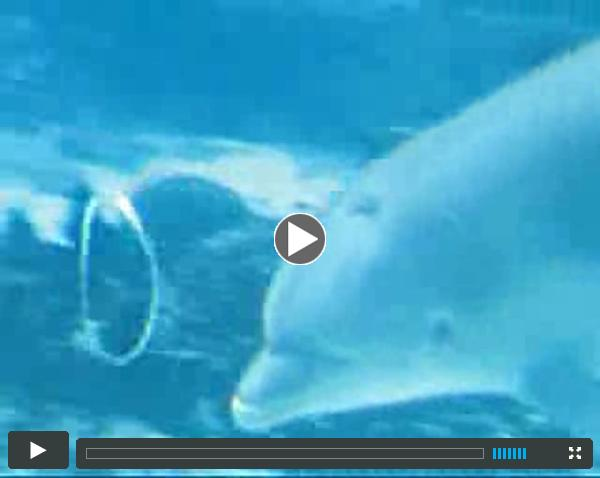 dolphin BlowingRings video