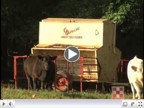 Creep Feeding Calves
